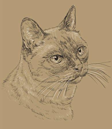 Vector outline monochrome portrait of curious Thai Cat.