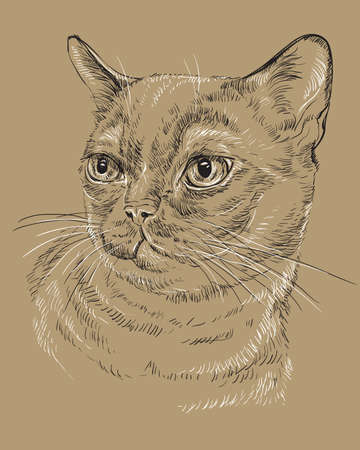 Vector outline monochrome portrait of curious Burmese Cat in black and white colors. Hand drawing illustration isolated on brown background