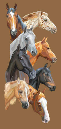 Vertical postcard with portraits of horses breeds (Trakehner horse, Welsh Pony, Orlov Trotter, Arabian horse, Appaloosa horse) isolated on brown background. Vector colorful illustration. Çizim