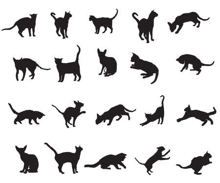 Set of different breeds cats silhouettes (sitting, standing, lying, playing) in black color isolated on white background. Vector  monochrome illustration