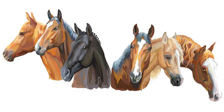 Set of colorful vector portraits of horses breeds (Trakehner horse, Welsh Pony, Appaloosa horse) isolated on white background