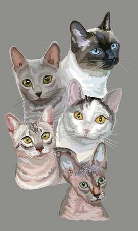 灰色の背景に分離された猫の品種(エジプトのマウ、ロシアブルー、スフィンクス、タイの猫)の肖像画を持つ垂直はがき。ベクトルカラフルなイラス