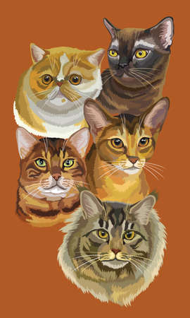 Vertical postcard with portraits of cats breeds (Exotic Shorthair, Abyssinian, Bengal, Burmese, Maine Coon cats) isolated on brown background. Vector colorful illustration.