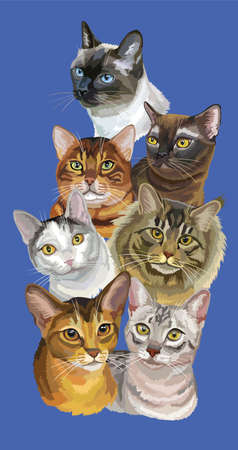 Vertical postcard with portraits of cats breeds (Abyssinian; Bengal; Burmese; Egyptian Mau; Maine Coon; mongrel cat; Thai cats) isolated on blue background. Vector colorful illustration.