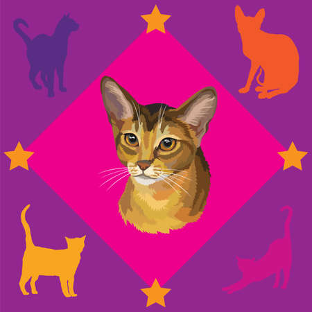 Colorful seamless pattern with portrait of Abyssinian Cat on pink and purple background with stars and silhouettes of cats, vector illustration