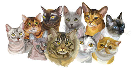 Set of colorful vector portraits of cats  breeds (Exotic Shorthair, Abyssinian, Bengal , Burmese, Egyptian Mau, Maine Coon, Russian Blue, Sphynx , Thai cats) isolated on white background