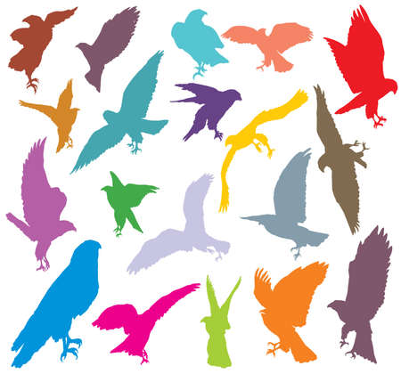 Set of vector colorful cut out flying and sitting silhouettes of eagle, hawk isolated on white background