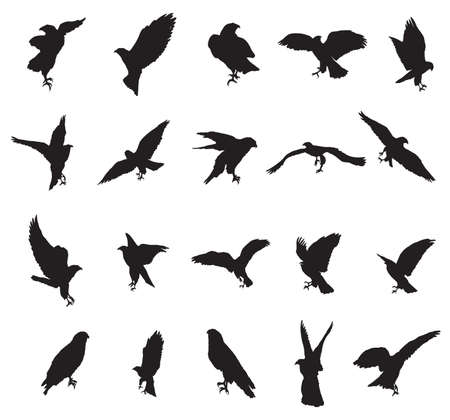 Set of vector monochrome cut out flying and sitting silhouettes of eagle, hawk isolated on white background Иллюстрация
