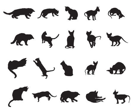 Set of different breeds cats silhouettes (sitting, standing, lying, playing) in black color isolated on white background. Vector monochrome illustration.