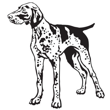 Decorative portrait of standing in profile German Shorthaired Pointer, vector isolated illustration in black color on white background