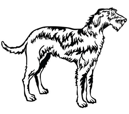 Decorative portrait of standing in profile Irish Wolfhound, vector isolated illustration in black color on white background