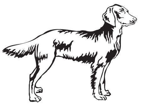 Decorative portrait of standing in profile longhair Weimaraner, vector isolated illustration in black color on white background Illustration
