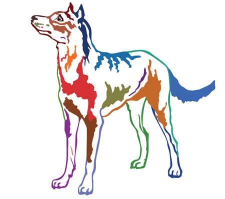 Colorful contour decorative portrait of standing in profile Beauceron (sheepdog from Beauce), vector isolated illustration on white background Illustration