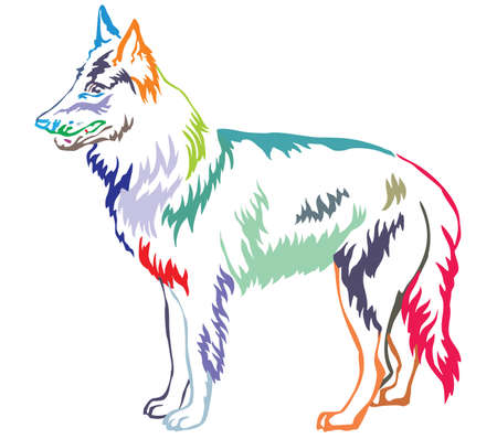 Colorful contour decorative portrait of standing in profile Belgian Shepherd (Groenendael), vector isolated illustration on white background
