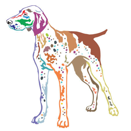 Colorful contour decorative portrait of standing in profile German Shorthaired Pointer, vector isolated illustration on white background