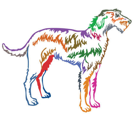 Colorful contour decorative portrait of standing in profile Irish Wolfhound, vector isolated illustration on white background
