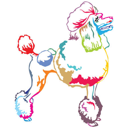 Colorful contour decorative portrait of standing in profile Poodle, vector isolated illustration on white background