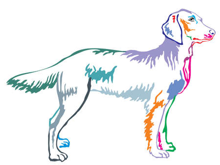 Colorful contour decorative portrait of standing in profile longhair Weimaraner, vector isolated illustration on white background Illustration