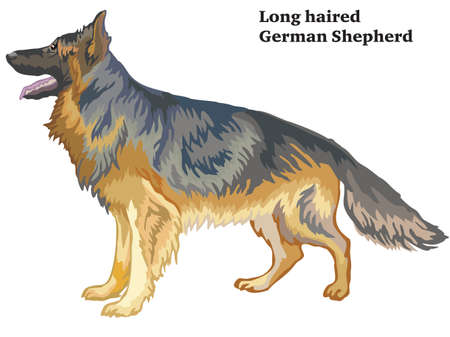 Colorful decorative portrait of standing in profile longhaired German Shepherd , vector isolated illustration on white background