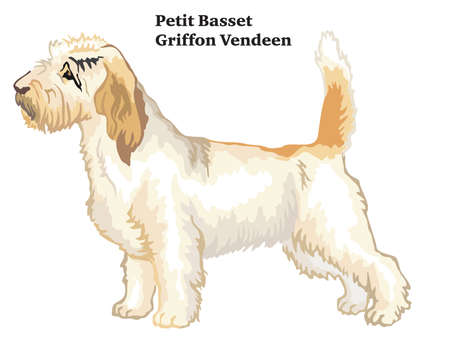 Colorful decorative portrait of standing in profile Petit Basset Griffon Vendeen, vector isolated illustration on white background Иллюстрация