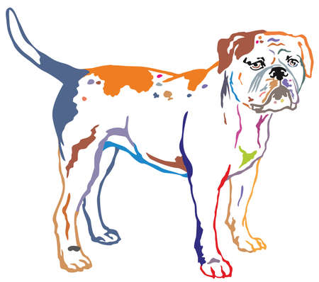 Colorful contour decorative portrait of standing in profile American Bulldog, vector isolated illustration on white background Ilustracja