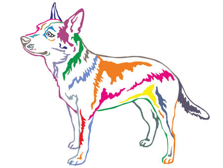 Colorful contour decorative portrait of standing in profile Australian Cattle Dog, vector isolated illustration on white background