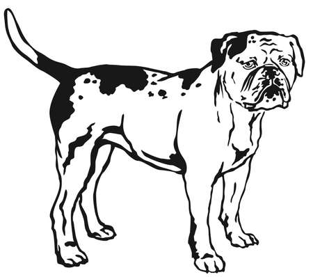 Decorative portrait of standing in profile American Bulldog, vector isolated illustration in black color on white background