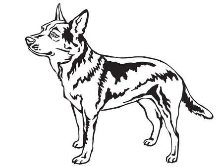 Decoratief portret van status in profiel Australische Veehond, vector geïsoleerde illustratie in zwarte kleur op witte achtergrond
