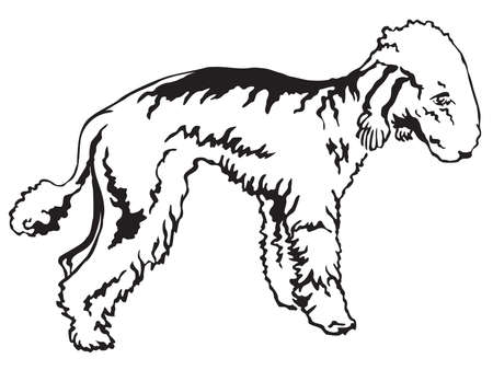 Decorative portrait of standing in profile Bedlington Terrier, vector isolated illustration in black color on white background