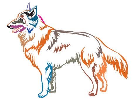 Colorful contour decorative portrait of standing in profile Belgian Shepherd Tervuren, vector isolated illustration on white background
