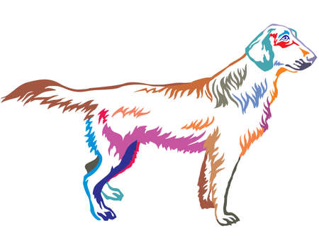 Colorful contour decorative portrait of standing in profile Flat-Coated Retriever, vector isolated illustration on white background