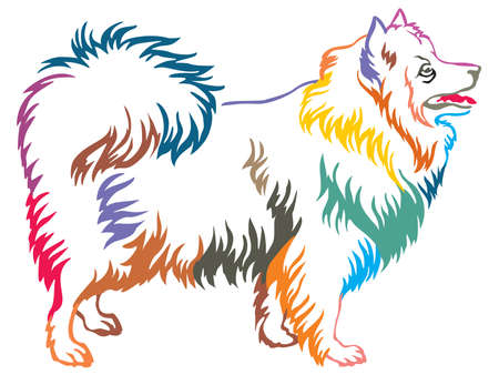 Colorful contour decorative portrait of standing in profile Japanese Spitz, vector isolated illustration on white background
