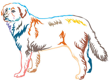 Colorful contour decorative portrait of standing in profile Maremma Sheepdog, vector isolated illustration on white background