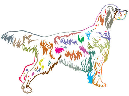 Colorful contour decorative portrait of standing in profile English Setter, vector isolated illustration on white background