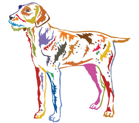 Colorful contour decorative portrait of standing in profile German Wirehaired Pointer, vector isolated illustration on white background