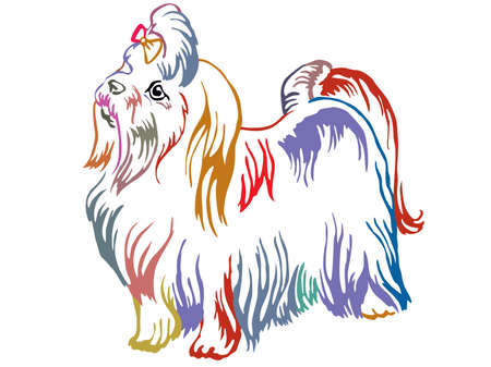Colorful contour decorative portrait of standing in profile Maltese dog, vector isolated illustration on white background