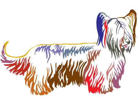 Colorful contour decorative portrait of standing in profile Skye Terrier, vector isolated illustration on white background Stock Illustratie