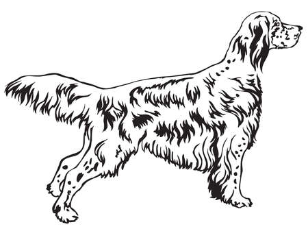 Decorative portrait of standing in profile English Setter, vector isolated illustration in black color on white background