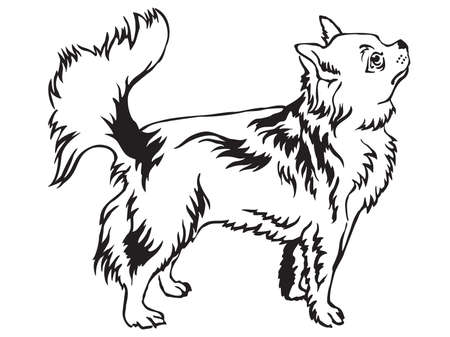 Decorative portrait of standing in profile Longhaired Chihuahua, vector isolated illustration in black color on white background