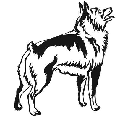 Decorative portrait of standing in profile Schipperke, vector isolated illustration in black color on white background 向量圖像