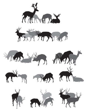 Group of black and grey isolated silhouettes of deers (male an female red deer) standing,walking and lying isolated on white background. Vector illustration. Illustration