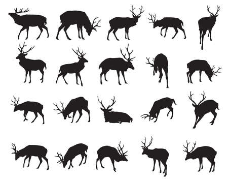 Set of vector standing and lying Red deer silhouettes (male) isolated on white background