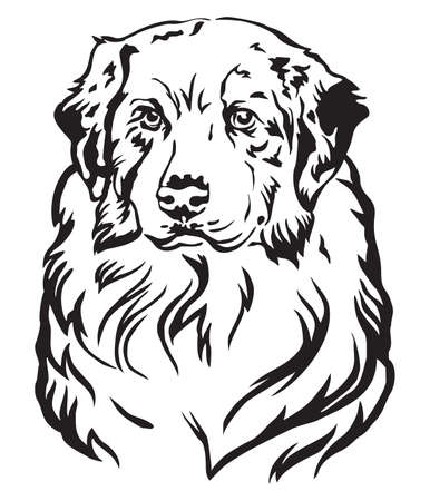 Decorative portrait of dog Australian shepherd, vector isolated illustration in black color on white background Ilustração