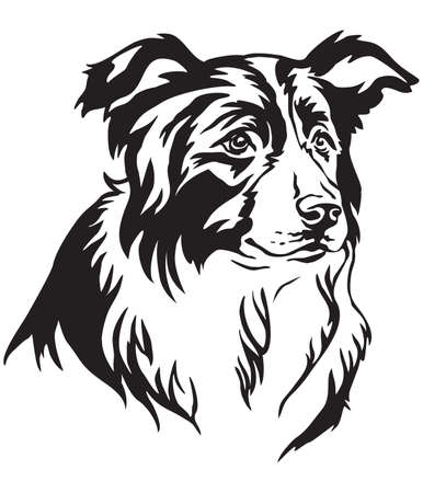 Decorative portrait of dog Border Collie, vector isolated illustration in black color on white background Vettoriali