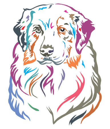 Colorful decorative portrait of dog Australian shepherd, vector illustration in different colors isolated on white background