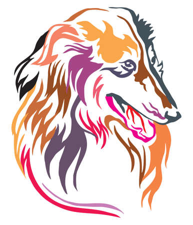Colorful decorative portrait of dog Collie, vector illustration in different colors isolated on white background