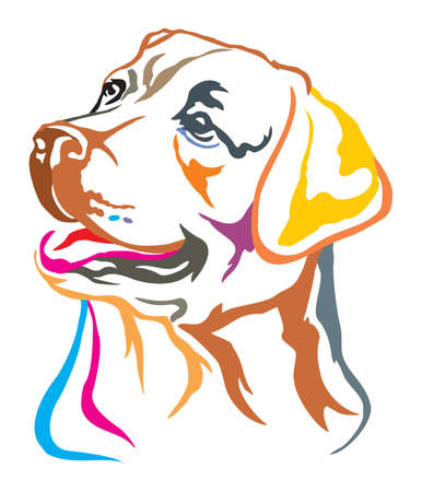 Colorful decorative portrait of dog  Labrador Retriever, vector illustration in different colors isolated on white background