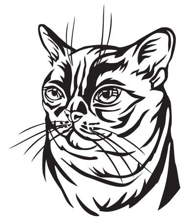 Decorative portrait in profile of Burmese Cat, vector isolated illustration in black color on white background