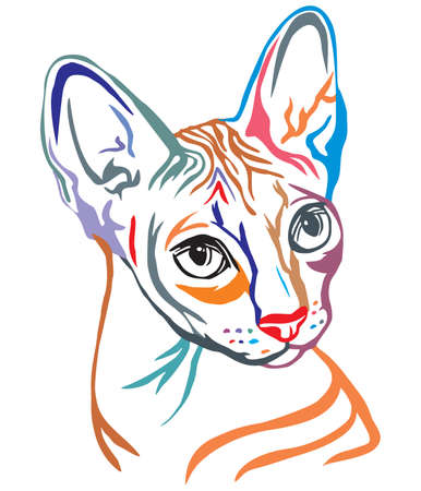 Colorful decorative portrait in profile of Sphynx Cat, contour vector isolated illustration in black color on white background