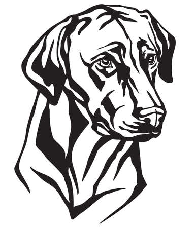 Decorative portrait of Dog Rhodesian Ridgeback, vector isolated illustration in black color on white background. Image for design and tattoo.